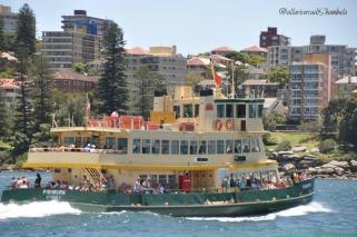 Sydney 31