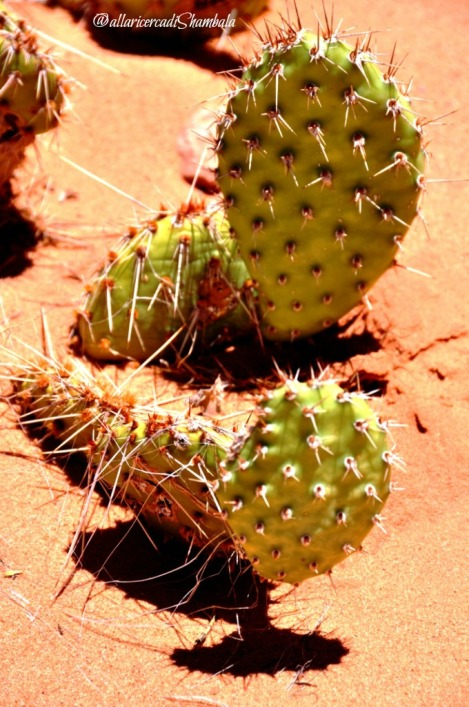 Arches NP cactus (2)