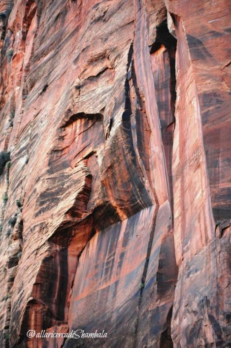 Zion NP roccia