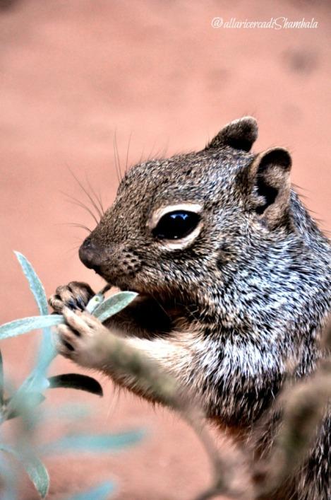Zion NP scoiattoli2